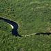 Sonido de la selva del Amazonas