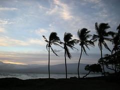 Four Palms (RV Bob) Tags: ocean trees beach clouds sunrise nikon maui palm haleakala l12 irresistiblebeauty