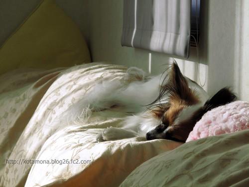 朝のうたた寝