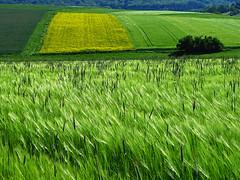 Shades of green (RainerSchuetz) Tags: field farming land agriculture acre mywinners flickrdiamond artofimages bestcapturesaoi