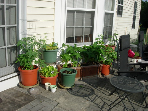 Potted plants 2010