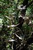 Banias, Israel (Mark Lukoyanichev) Tags: nature israel nikon banias hellmaker