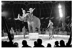 Jodi in the Circus