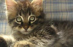 feline look (flavio.leone) Tags: cats look animals cat eyes feline occhi sguardo felino gatto gatti animali impressedbeauty tousethisphotopleasecontactmewwwflavioleoneit