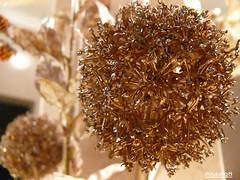 golden flower (Aljazi.q8) Tags: aljazi