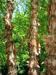 Bark (Ann Althouse) Tags: bark