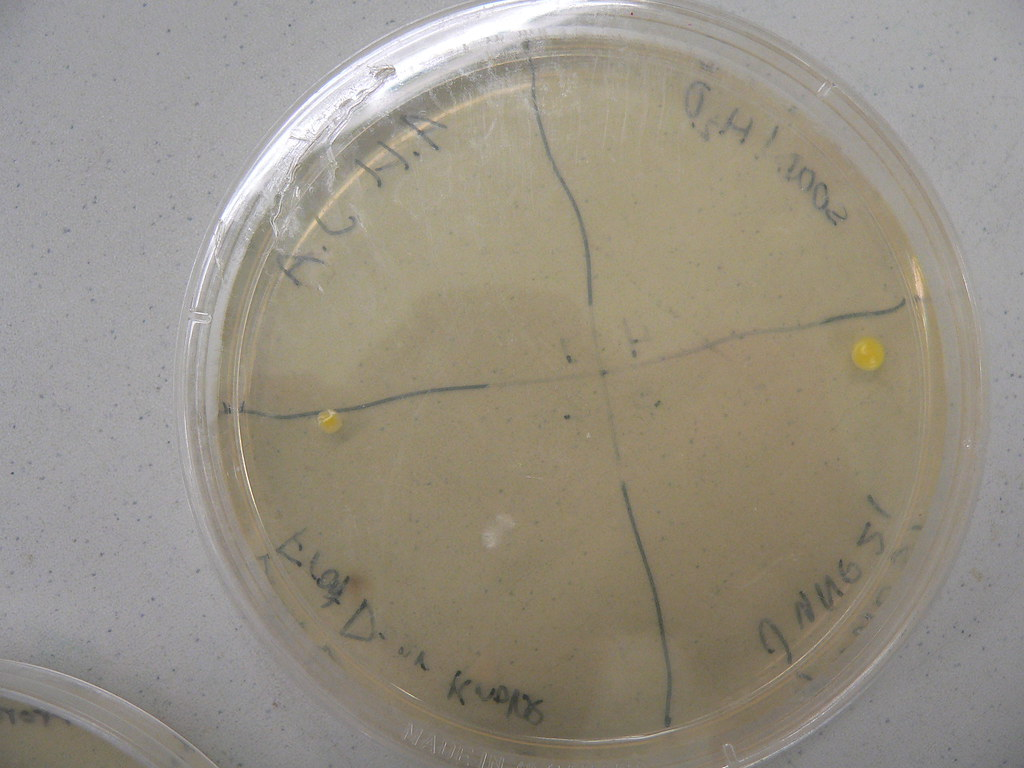 Our colonies of bacteria.....