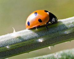 Lady Bug-1 (by Property#1)