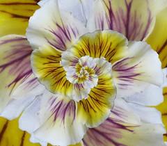 Flower Droste