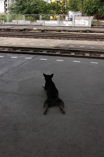 犬も電車を待つ