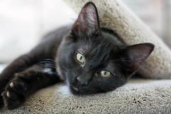 You know we all do it, please share... (Hockey.Lover) Tags: cats kittens jetli nicknames bestofcats boc0807