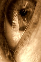 I could murder a coffee (Anima Fotografie) Tags: silly macro eye sepia bored steiner62
