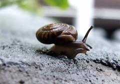 Keep An Eye Out or Up.... (mightyquinninwky) Tags: wet rain rural geotagged 5 kentucky shell snail award explore porch handrail sundaymorning invite westernkentucky ohiorivervalley piratetreasure supershot morganfieldkentucky excellentphotographerawards geo:lon=87905602 naturewatcher geo:lat=37693261 exploreformyspacestation bestofformyspacestation
