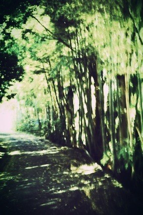 毎朝通る道の竹が好き。広い広い竹林をブラブラ歩いてみたい。 #SwankoLab