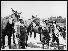 Gas mask drill for artillery horses