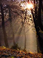 November dawn (athos[hun]) Tags: park november autumn trees nature sunshine fog dawn lights haze budapest termszet sunbeams kd pra hajnal sz fk napfny npliget fnyek napsugarak
