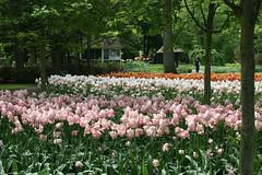 IMG_3204 (jdsa2001) Tags: flowers flores holland netherlands amsterdam gardens tulip bulbs holanda mayo jardines 2007 bulbos tulipanes keukenhoff