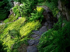Yellow Groundcover, Rock Laid Trails - by pictoscribe