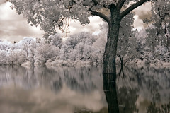 prayers for rain (infrared) (mike.irwin) Tags: longexposure trees lake reflection water ir interestingness nikon long exposure texas flood explore infrared lewisville hoya r72 nikonstunninggallery youvegottheeye wwwmikeirwinartcom