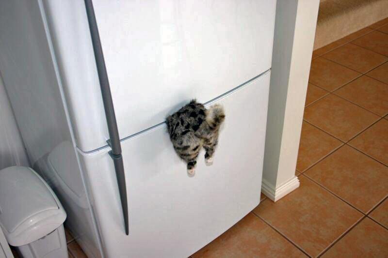 Kitty thread. - Page 2 778430596_7faa1f44dd_o