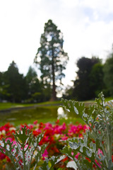memorial gardens (Painterface) Tags: tring memorialgardens canoneosd400 alexpainter