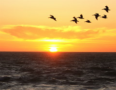 Fly Home (The Wandering Angel) Tags: ocean california sunset color water birds coast poetry pacific aplusphoto superbmasterpiece soulsresonance