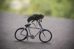 Tour De Mouches (ukaaa) Tags: macro bike bicycle digital fly mr gerald alive tourdefrance sonia breathtaking notphotoshopped tomboonen naturesfinest notdead diamondclassphotographer flickrdiamond bratanesque theunforgettablepicture toomuchglue