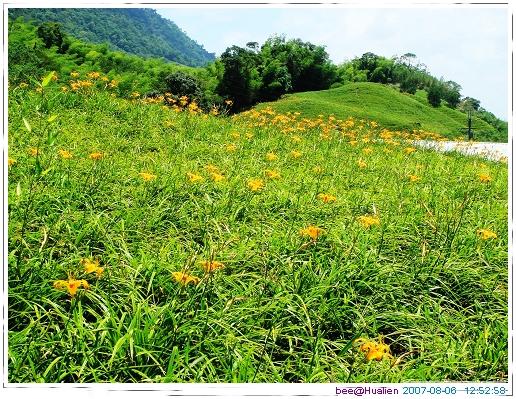 花蓮賞美麗的金針花在赤科山 (5)