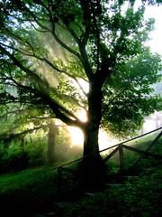 autumn dawn (giggie larue) Tags: light shadow tree green dawn botanicals giggie lastsundaymorninginpittsburgh