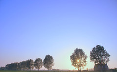 Zon (Harry Mijland) Tags: trees holland bomen utrecht nederland polder maarssen tienhoven dearharry bethunepolder harrymijland