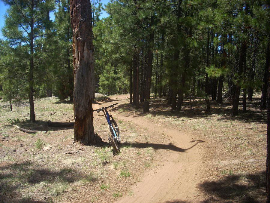 Memorial Day AZ 2010 005