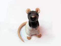 Lemmi the Rat (DragonsAndBeasties) Tags: portrait pet brown white cute mouse rat little critter gift etsy custom bg beastie ratty beccagolins
