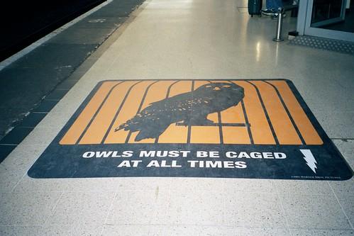 Platform 9 3/4 owls