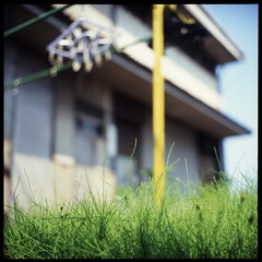 Behind the grass (gullevek) Tags: flowers red plants black 6x6 film grass yellow japan geotagged fuji bokeh  kanagawa  kawasaki sampo   scannedfromnegative iso50 rolleiflex28c epsongtx900 fujifortiasp50 geo:lat=3552826 geo:lon=139743291
