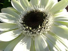 Caterina Photography (yonggeea82) Tags: white flower flickrdiamond platinumheartaward