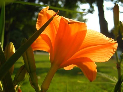 Flower Veins
