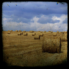 Summer classical TTV (Kat...) Tags: summer field geotagged hay t haybale champ foin 3w ttv fakettv defidefiouiner sainghinenmlantois bestofr thatsclassy balledefoin geo:lat=50592936 geo:lon=3188267