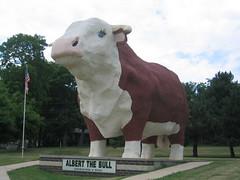 World's Largest Bull - Albert