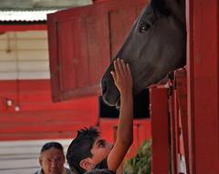 coneccion (nelson campos ros) Tags: caballos niños dervi