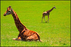 _MG_8056 (-itzaa) Tags: españa naturaleza nature animal spain cantabria pilarazaña