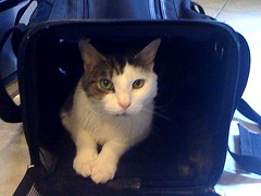Dexter wants to come with us