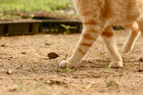 strutting