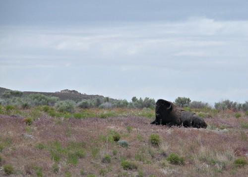 Antelope Island 021