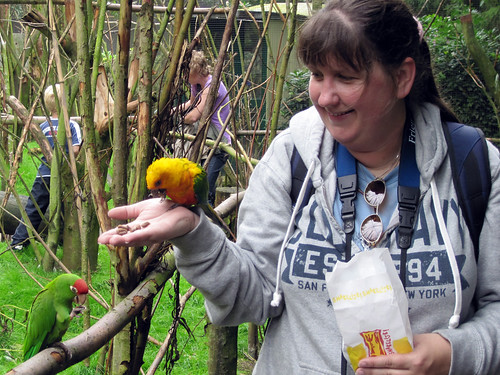 Jandaya Conure & Red-fronted Conure