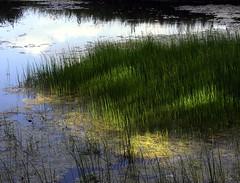 Evening on the pond (:Linda:) Tags: shadow reflection green water germany pond village thuringia grn teich reflexion schatten waterplant gewsser wasserpflanze brden