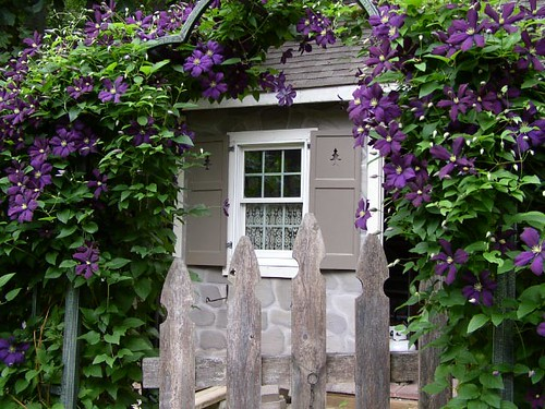Garden Cottage in bloom!