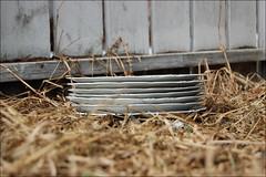 plates (ImagesAndObjects) Tags: alley plates kensington oldgrass