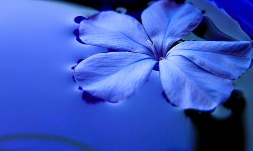 ورود زرقاء 752356808_66564d7f5f