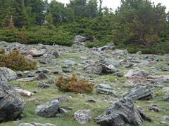 dscf4022.jpg (mbeldyk) Tags: marmot treeline rockymountainnationalpark twinsisterspeak
