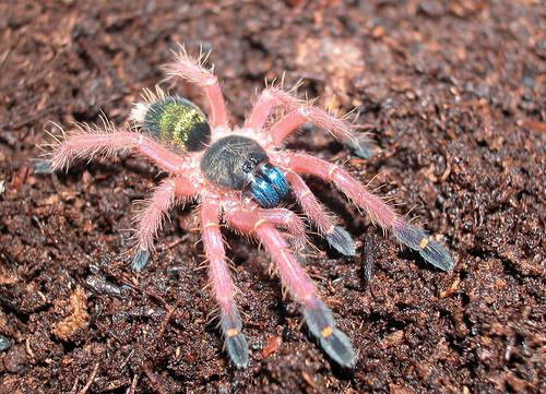 Las arañas tambien son bellas 1001194835_d5960b9805